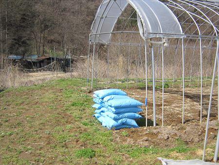 ほうれん草栽培に内城菌を取り入れてみます