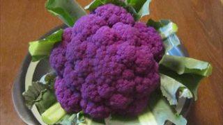 紫カリフラワー(パープルフラワー)を栽培してみました。
